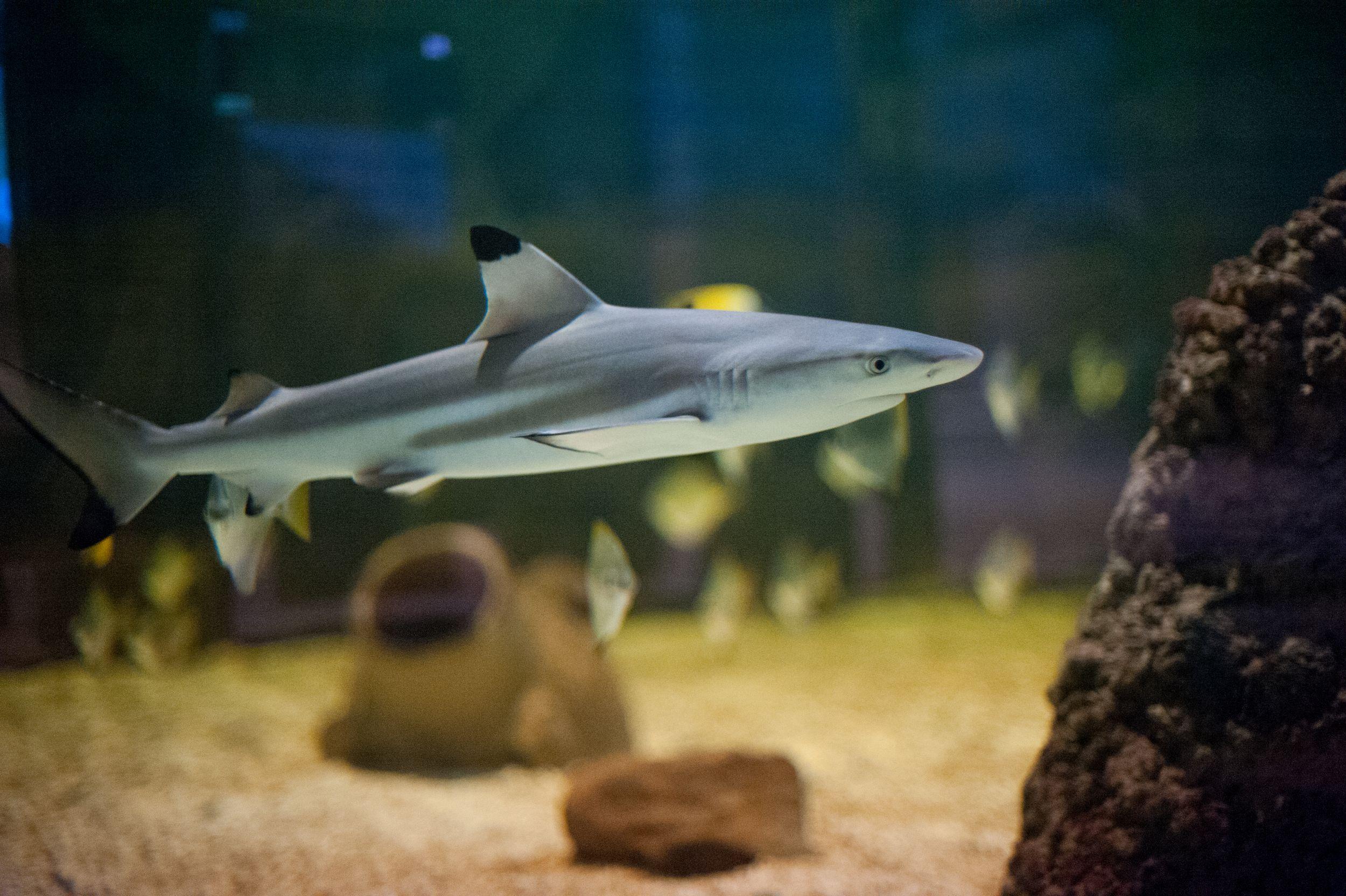 Blog – St Andrews Aquarium